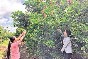 Tạo thương hiệu du lịch cho các vườn cây ăn trái vùng ven