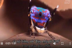 Phát hiện 7 loài nhện chim công mới