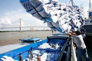 Thủ tướng yêu cầu xuất khẩu gạo phải xem xét kỹ lưỡng, thận trọng