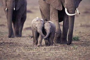 Top 10 khoảnh khắc cực kỳ đáng yêu của voi con