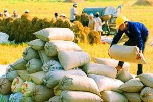 Bộ Công Thương đề xuất cho xuất khẩu 400 nghìn tấn gạo trong tháng 4