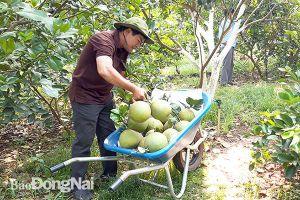 Những đảng viên đi đầu trong sản xuất nông nghiệp