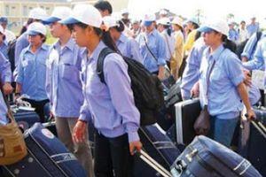 Cấm lao động Việt Nam ra nước ngoài làm nghề massage, săn bắt cá sấu, cá mập