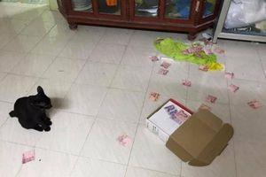 Thấy chú mèo làm rơi chiếc hộp trên nóc tủ, cô vợ chạy đến thì phát hiện ra bí mật giấu kín của chồng