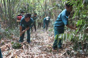 Nỗ lực giữ gìn lá phổi xanh Bù Gia Mập của miền Đông đất đỏ