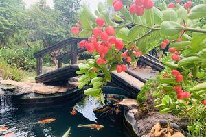 Nhà vườn như biệt phủ của diễn viên hài Hoàng Mập