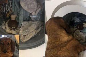 Đồ chơi yêu thích bị cho vào máy giặt quay mòng mòng, chú chó buồn bã đứng ngóng, than khóc suốt 1 giờ liền