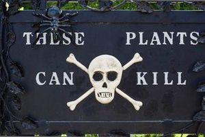 Rùng mình khi đến thăm khu vườn 'sờ vào đâu cũng chết'
