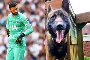 Đội trưởng Tottenham chi gần nửa tỷ đồng mua chó giữ nhà