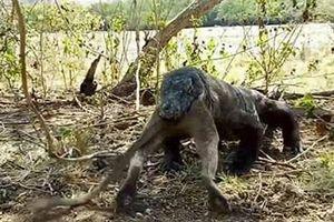 Kinh hoàng trước cảnh rồng Komodo nuốt chửng khỉ lớn