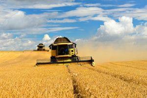 Australia thất vọng về quyết định áp thuế nông sản mới của Trung Quốc