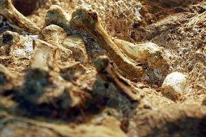 Bí ẩn sinh vật 2 triệu tuổi mang 'bàn tay của con người'