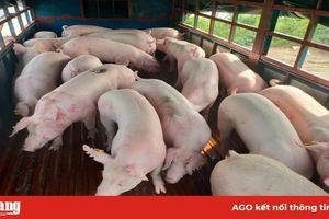 Giá heo hơi hôm nay 23-5: 'Ông lớn' mạnh tay tăng 5.000 đồng/kg lợn hơi, phá vỡ cam kết