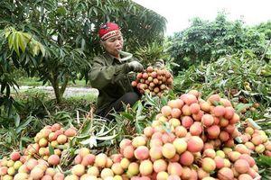 Thúc đẩy tiêu thụ hàng hóa nông sản sang thị trường Trung Quốc