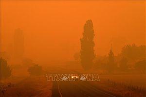 Dịch bệnh COVID-19 cản trở nỗ lực tái thiết sau thảm họa cháy rừng ở Australia