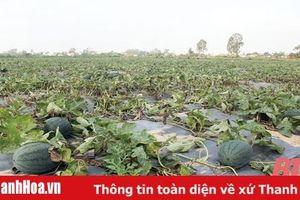 Lấy HTX làm 'hạt nhân' phát triển nông nghiệp hàng hóa ở cấp xã