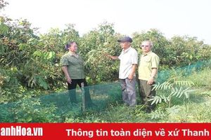 Cựu thanh niên tình nguyện Trịnh Văn Toàn làm kinh tế giỏi