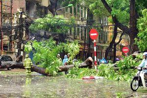 Ứng trực, giải tỏa cây xanh gãy đổ do mưa bão 24/24 giờ