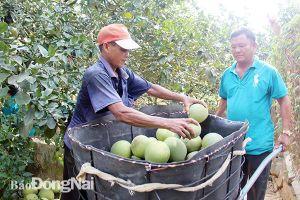Cho vay trong lĩnh vực nông nghiệp, nông thôn đạt khoảng 57,2 ngàn tỷ đồng