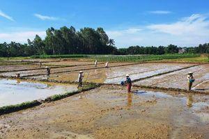 Quảng Nam ứng phó khô hạn