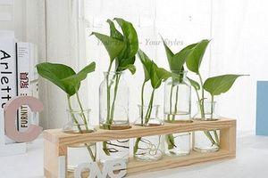 CLIP: Mách bạn 7 loại cây trồng trong nước trang trí bàn làm tuyệt đẹp