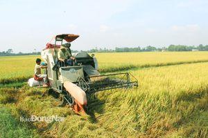 Nông nghiệp thời hội nhập: Cần cơ giới hóa quy mô lớn