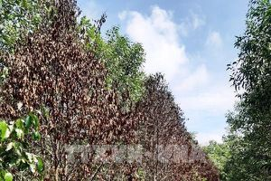 Tây Ninh: Kiên quyết xử lý vi phạm lấn chiếm, sử dụng đất rừng phòng hộ sai mục đích