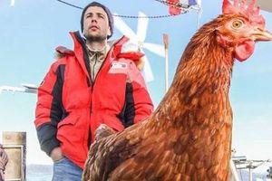 Không cần bạn gái, chàng trai du lịch thế giới cùng gà mái