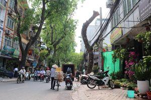 Hà Nội: Nhiều cây xanh chết khô, nghiêng đổ chưa được xử lý