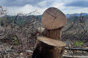 2 ha rừng bị chặt phá trong thời gian giãn cách xã hội
