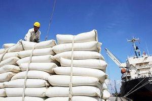 Sẽ có kết quả thanh tra điều hành xuất khẩu gạo trong tháng 6