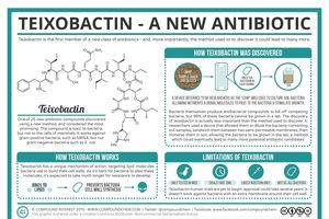Teixobactin giúp điều trị biến chứng của bệnh Covid-19