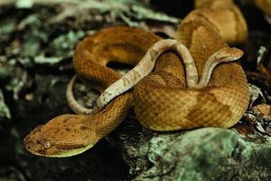 'Thót tim' ở hòn đảo toàn rắn độc, cấm người đặt chân đến