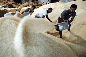 Các nước Tây Phi sẽ tăng nhập khẩu gạo niên vụ 2020/2021
