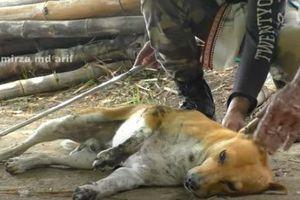 Clip: Cứu sống chó nhà sắp chết bị hổ mang chúa kịch độc cắn