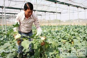 Bắc Giang: Thu hàng trăm triệu đồng từ trồng rau củ sạch