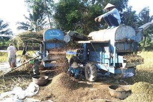 Chuyển đổi luân canh cây mè trên đất lúa