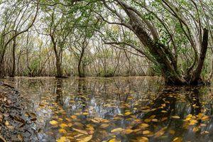 Thừa Thiên Huế: Thành lập Khu bảo tồn thiên nhiên đất ngập nước Tam Giang - Cầu Hai