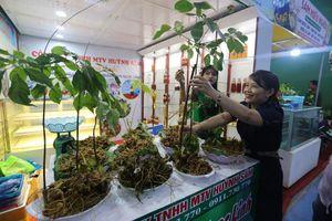 Quảng Nam phê duyệt chủ trương 7 dự án đầu tư vào nông nghiệp