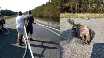 Hàng loạt cá chết phơi xác dọc đường cao tốc Mỹ