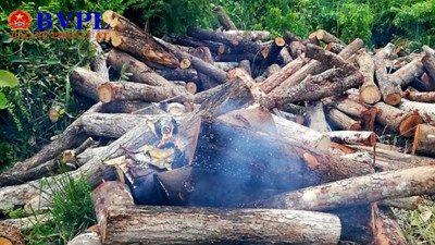 Tưới xăng đốt 'gỗ tang vật', khiến chính mình và một cán bộ kiểm lâm bị bỏng