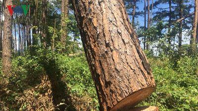 Cận cảnh việc phá rừng cạnh đồn công an tại Đắk Nông