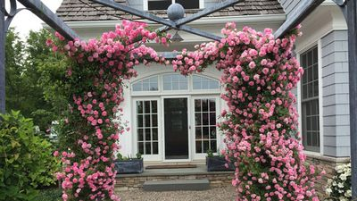 Clip: Kỹ thuật trồng hoa hồng leo từ A-Z