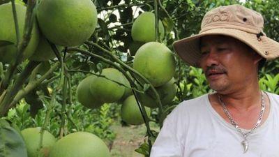 Trồng 'lung tung' cây có múi ở đất lạ, trái đã ngọt lại có thêm tiền
