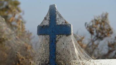 Rợn người cảnh mạng nhện phủ kín vùng Hồ Vistonida, Hy Lạp