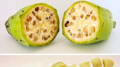 Ngoại hình thuở ban đầu của các loại rau quả trông như thế nào?