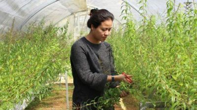 Hot girl Đà Lạt trồng cây lạ có bao nhiêu lái 'khuân' sạch bấy nhiêu