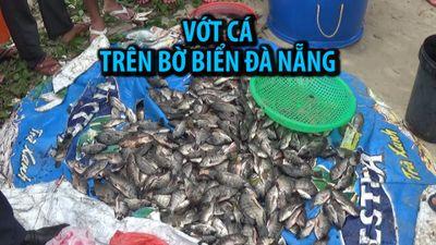Vớt hàng tấn cá trê 'khủng', cá rô trên bờ biển Đà Nẵng sau trận mưa lịch sử