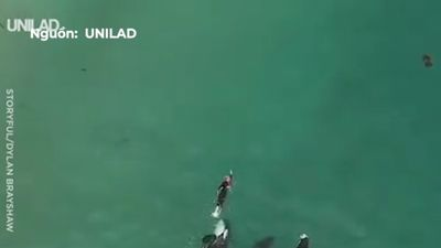 Thợ lặn bơi lội cùng đàn cá voi sát thủ