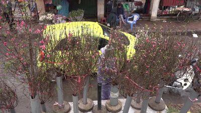 Còn lâu mới đến Tết nhưng hoa đào đã xuống phố Hà Nội, cành đắt nhất 1,2 triệu đồng